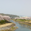 Tojo river's Sakura in Hyogo-ken