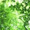 新緑を感じるグリーンで人モテメイク