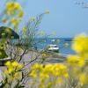 江の島~ぐるっと島歩き~