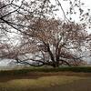 これまでに訪ねた「桜の古墳」 私的10選
