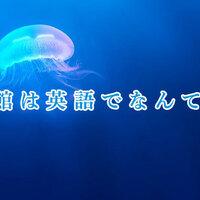 水族館は英語でなんて言う?水族館で使える英語表現をご紹介します!