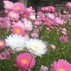 9月のお花見  ~ミニお花図鑑つき@パース~