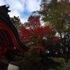 瑜伽神社の紅葉「もみじ」