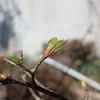 どんぐりの芽吹きと苔