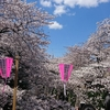 東京散歩「満開の桜と目黒川沿いの名所」