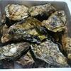 食べチョクでお取り寄せした生牡蠣で牡蠣パーティー【熟女の日常】