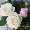 """【庭】Rosa.min """" Infinity """""""