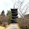 【京都】『仁和寺』に行ってきました。 京都旅行 京の冬の旅 京都観光 女子旅 主婦ブログ