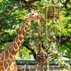 【2018年ハワイ】ハワイ州唯一の動物園!ホノルル動物園(Honolulu Zoo)へ行ってきた・4日目前編【2018.12.4】