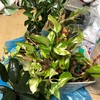 台風と観葉植物