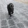 ニコのごきげん散歩。