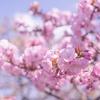 2020年4月1週目の相場雑感~ジタバタしないで桜並木ドライブへ♪~