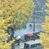 東京都心で初雪、11月では54年ぶり