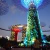 2016シンガポール旅行記6 ガーデンズバイザベイの夜景と鼎泰豊での食事