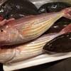 本日の漁港直送の魚たち