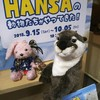 HANSAの期間限定ショップ☆*:.。. o(≧▽≦)o .。.:*☆