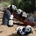 アメリカの動物園にLEGOで作られた動物たちがやって来る!