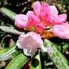 暑い日、「サワフタギ(沢塞)」の白い花が清々し…。