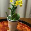 【旬を味わう あさりのみそ汁と小松菜の菜花 花が咲いてキレイです】