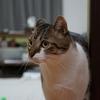 我が家の愛猫うにちゃんコレクション2017秋 SONY α6000で撮影