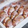 2017年2月27日 小浜漁港 お魚情報