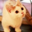 猫専門ブリーダー/ネコカフェ「koneconeko」 詳しい内容は→http://www.nekosenmonten.com/