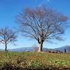 平塚〈ゆるぎの里〉吉沢と鷹取山へ行く