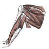テニスの解剖学!③~上腕三頭筋~