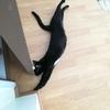 【猫ブログ】黒猫ココロに皮下点滴をぶっ刺す。後はタイ日常