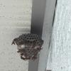 湖西市で二階軒下に出来た蜂の巣を駆除してきました