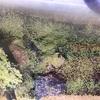 0.1tから始めるダイエット71日目 『ゼロから始めるアクアリウム3日目』体重と水草が芽吹いた!