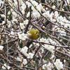 2月の日々と梅と鳥