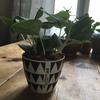 調布駅周辺で植物を買うならパルコの「ツクリバグリーン」が最高!