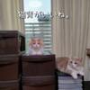 雨田甘夏、密着です。【猫と秋と譲り合い事情】