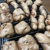 フスマ粉でパン作り~糖質制限