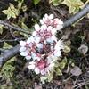 春は必ず巡ってくる。 **ブックマーク・ツイートから** 山猫ノート20