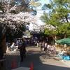 2020.04.05静岡浅間神社の桜