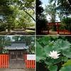 【半木神社(流木神社)】山城の森と水の景色『なからぎの森』に鎮座【京都府立植物園】