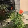 小さな花が咲きました