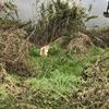 12月1日 河原猫の記録