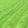 農園日誌Ⅱー「活きること」PART27