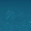 webgl-waterのコースティクスをshadertoyで実装した