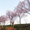 所用の道すがら/狭山池周辺の開花具合