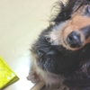 旅行や出張には【ペットホテル】選ぶポイントは?少しでも愛犬が安心できるように