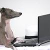 PC苦手でも大丈夫!はてなブログの画像を簡単に一括ダウンロードする方法