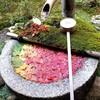 【京都】【御朱印】柳谷観音(楊谷寺)に行ってきました~京都旅行 京都観光 女子旅 主婦ブログ