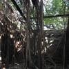 【台南】まるでジブリの世界?『安平樹屋』が楽し過ぎる!