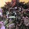 梅の季節は赤紫蘇ジュースの季節!作ったらその日に飲める赤しそジュースの作り方!