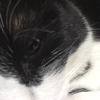 ★771鐘目『犬さん、カナリヤさん、牛さん、猿さん…、たくさん登場しているのに…、猫さんが居ないのは悲しいニャンでしょうの巻』【エムPのイケてる大人計画】