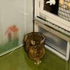 ウサギのちまき今日の1枚『時代劇のちまき』